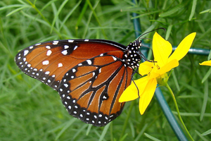 Butterfly_House_2